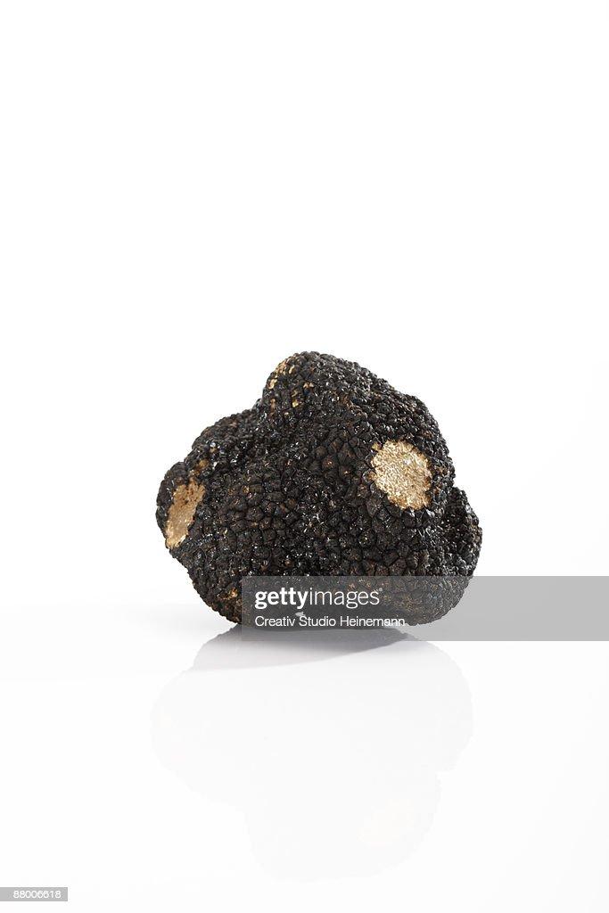 Black truffle on white background, close-up