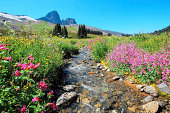black tusk mountain, blue sky, wide angle picture with stream as central focus, wildflowers.