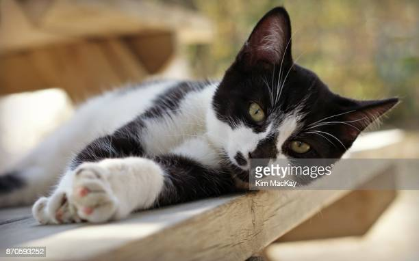 Black & White cat resting on picnic table