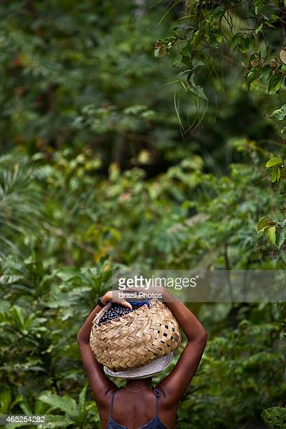 Black woman carries basket full of acai fruits in the forests of Sao Raimundo Quilombo A quilombo is a Brazilian hinterland settlement founded by...