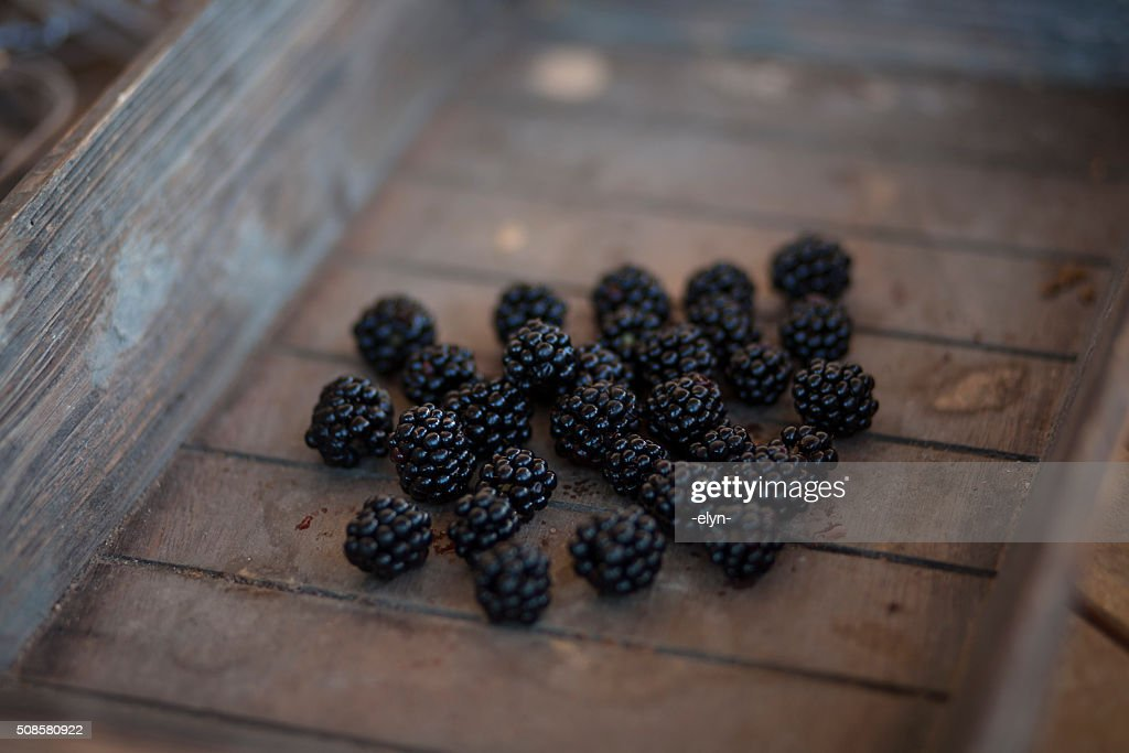 blackberries : Stock Photo