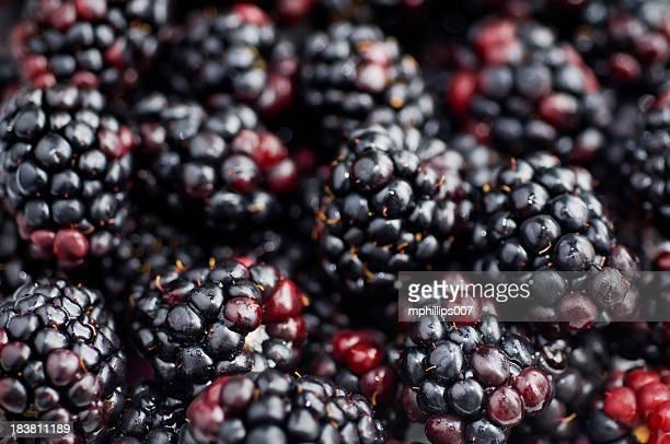 Blackberry-Hintergrund