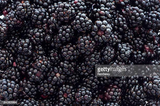 Blackberry arrière-plan