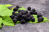 BlackBerry on black background close up photo