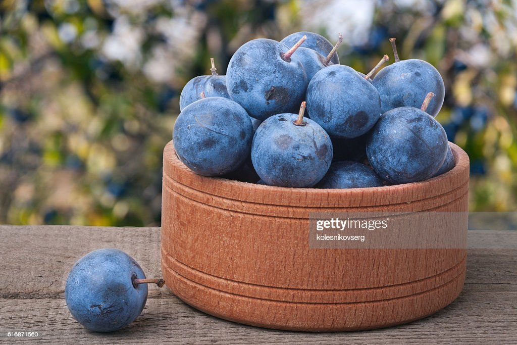 blackthorn berries in a wooden bowl on table with blurred : Stock Photo