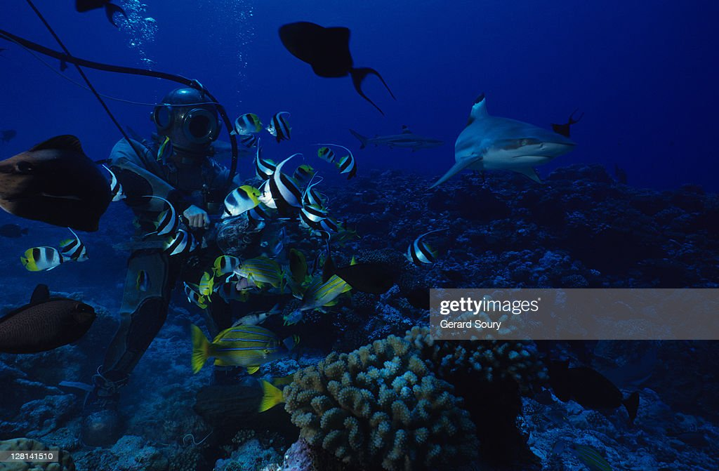 blacktip reef shark, carcharhinus melanopterus, with diver, polynesia : Stock Photo