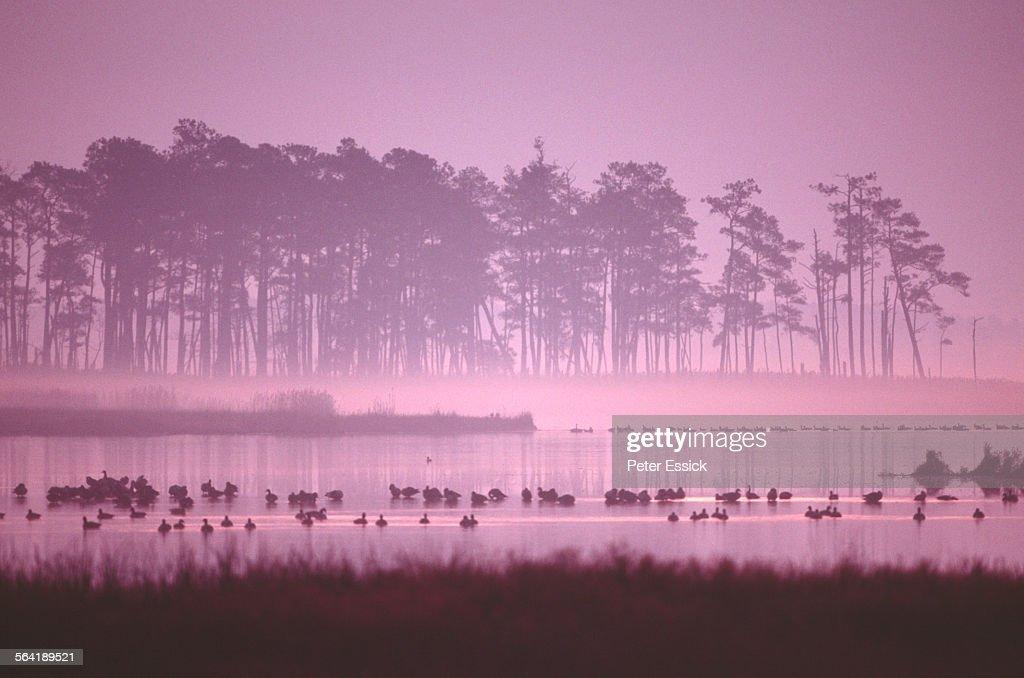 Blackwater National Wildlife Refuge, MD sunrise.