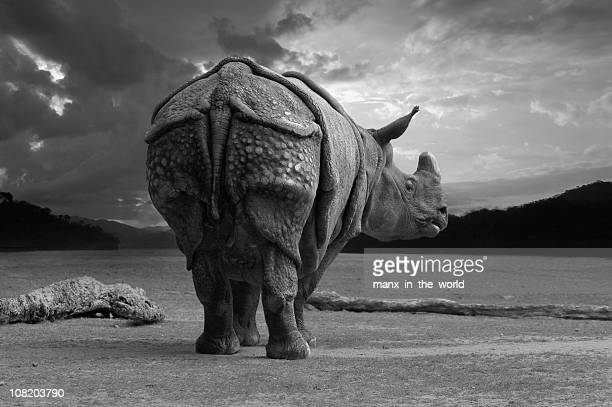 Black-white shot of rhinoceros with its rear to the camera