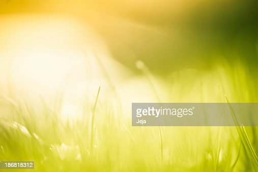 Blades of grass in the field.