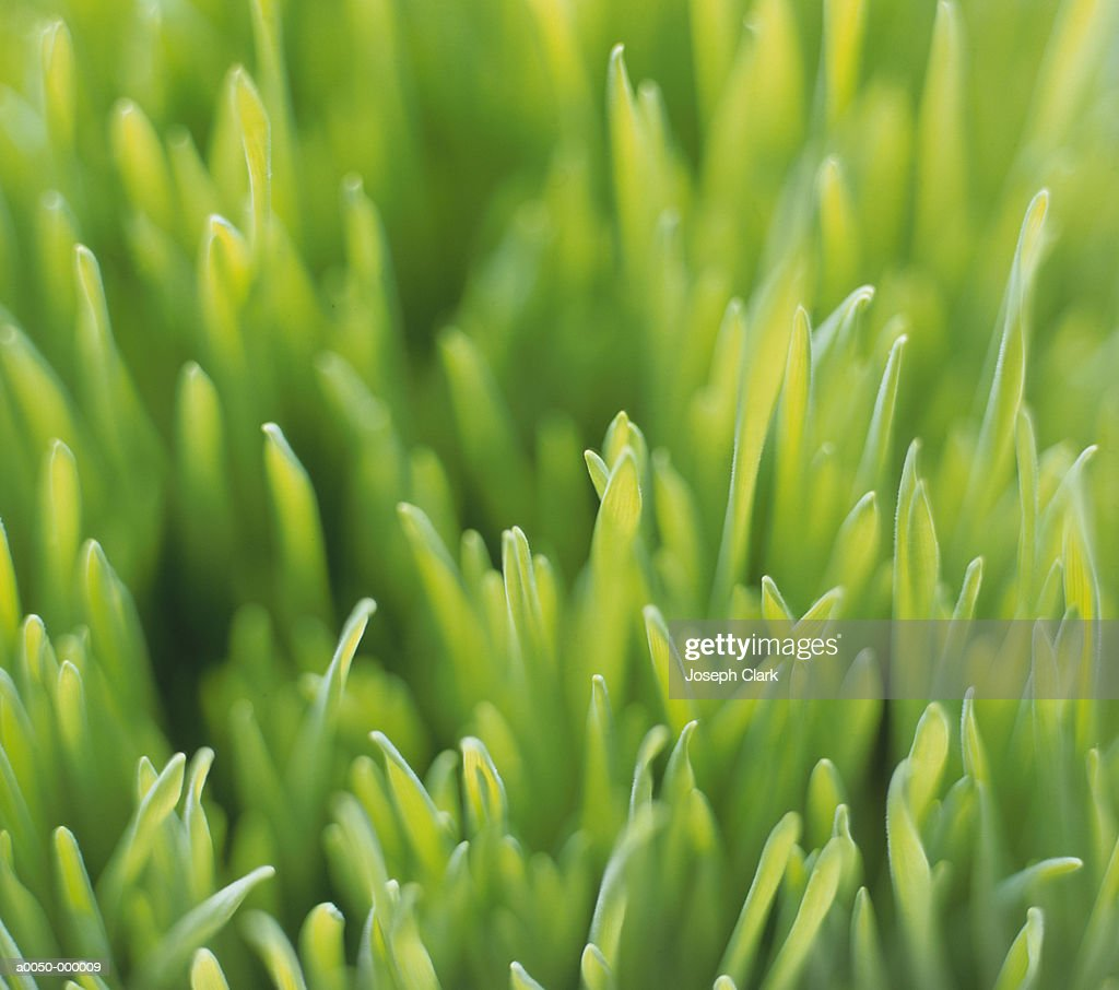Blades of Grass : Stock Photo