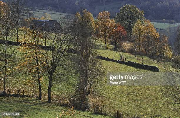 Blague valley Ariege Pyrenees France Grazing at the foot of Agert