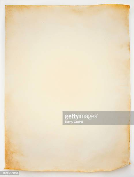 Blank sheet of old curled parchment paper
