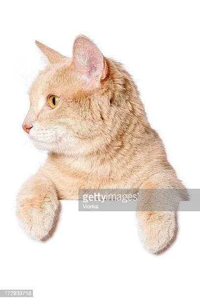 Sinal em branco de-Gato