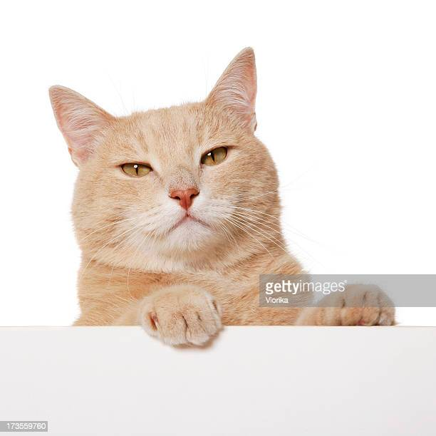 Blank Sign - Cat