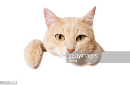 Blank Sign - Funny Cat
