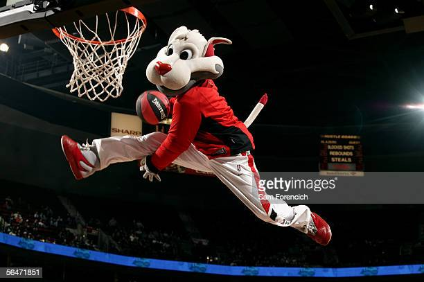 Blaze the Portland Trail Blazers mascot dunks during an intermission in the game against the Indiana Pacers on December 2 2005 at the Rose Garden...