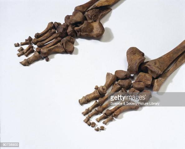 meet ancestors bleadon manatee