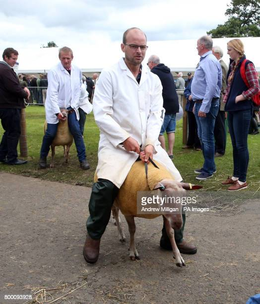 Bleu Du Maine sheep leave the show ring with farmers during the Royal Highland Show in Edinburgh