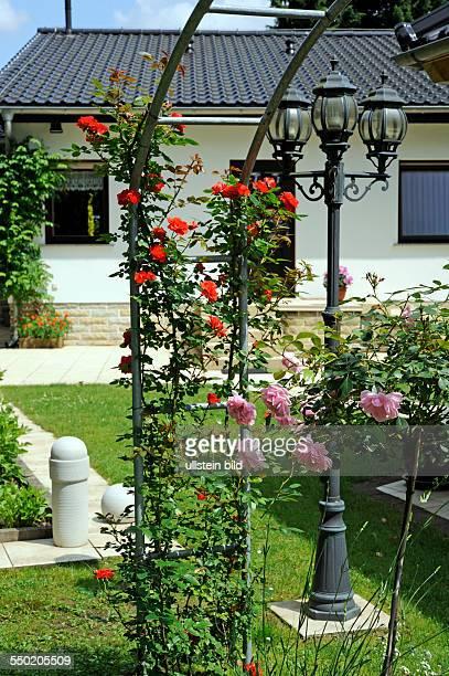 Blühende Kletterrosen am Rosenbogen im Garten an einem Landhaus
