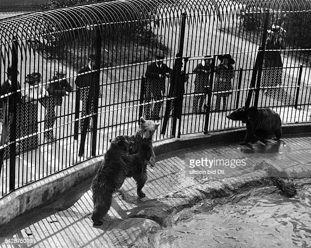 Blick in das Bärengehege 1911