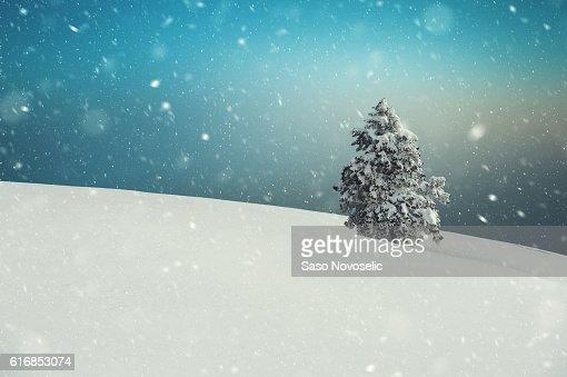 Blizzard In Winter Landscape : Stock Photo