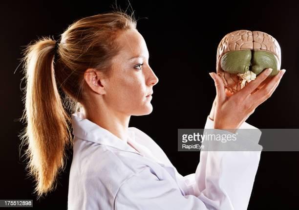 Blonde medical professionellen Studien Modell des menschlichen Gehirn Ernst