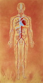 Blood circulation in the human body drawing