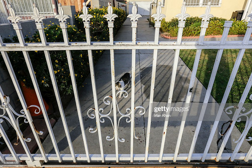 Blood spots are splattered on the drive of the house where a year-old girl died in a shooting on 300 N. Holly Avenue on February 10, 2016 in Compton, California. Authorities are searching for two men believed responsible for the shooting death during a suspected gang attack on February 9.
