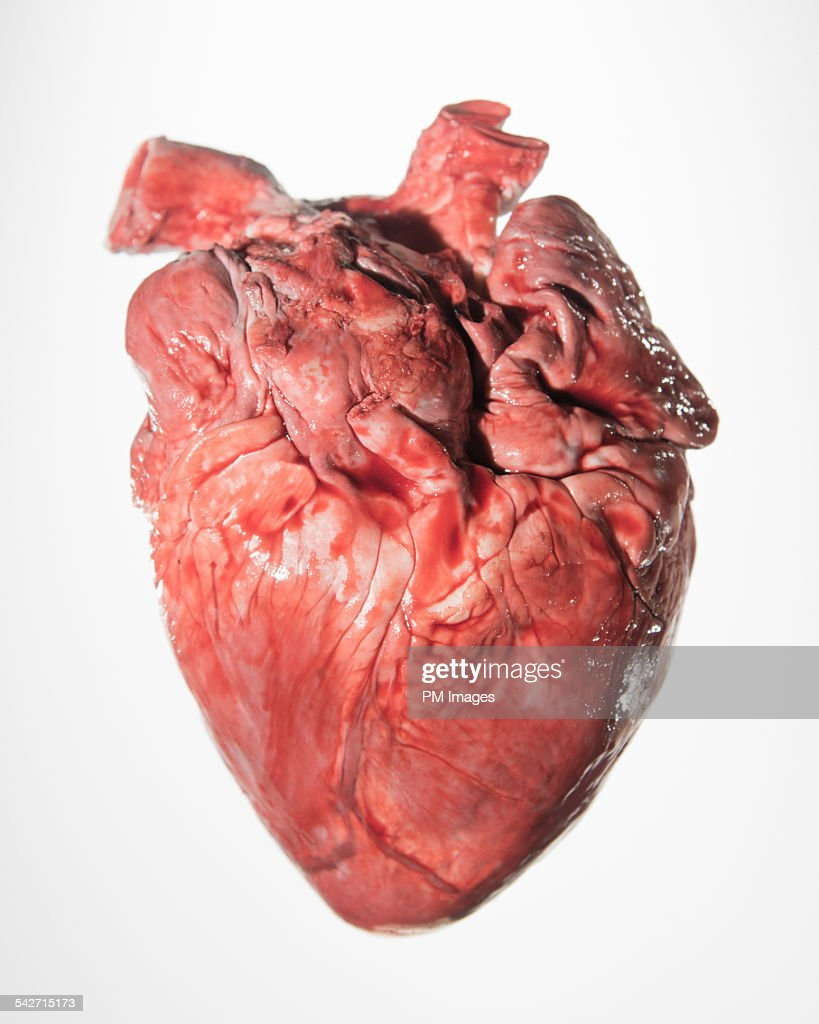 Bloody pig's heart