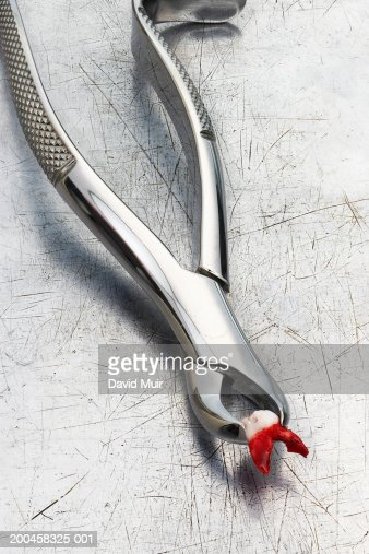 Bloody tooth in dentist's extraction tool on metallic surface,close-up