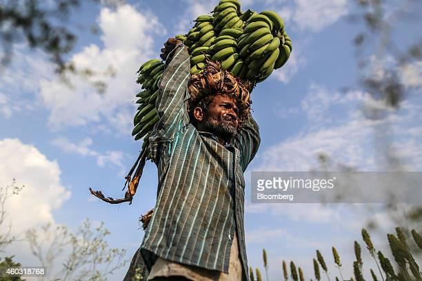 Bloomberg's Best Photos 2014 A day laborer carries banana stems on his head during a harvest in a field in Bhusawal Maharashtra India on Saturday Oct...