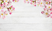 Blooming cherry blossoms with old wooden planks. Spring background with copyspace.