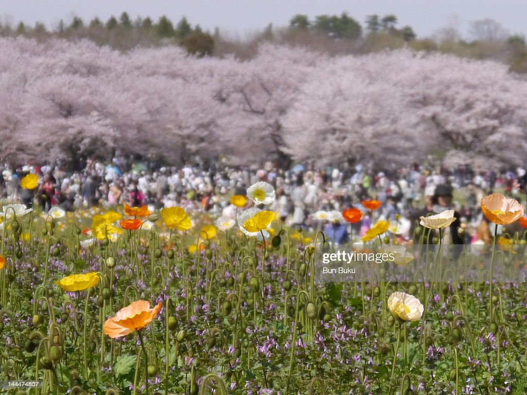 Blooming field : Stock Photo
