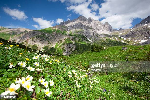 Blühende Blumen im lechtaler Alpen