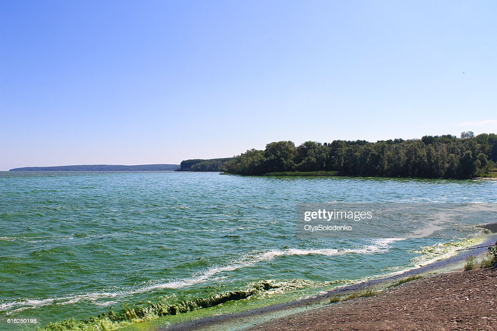 Blooming green water in reservoir on Dnieper river : Foto de stock