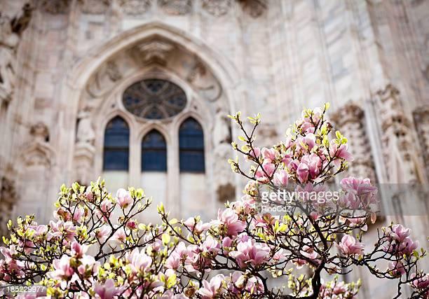 Éclosion d'une fleur de Magnolia contre Duomo fenêtre, Milan, Italie