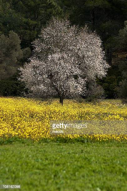 Blooming Meadow with Tree