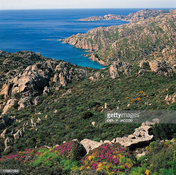 Blooming Montpelier cistus and Elands Sourfig eastern coast of Caprera Island La Maddalena Archipelago National Park Sardinia Italy