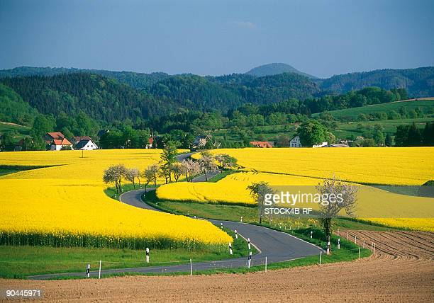 Blooming rape fields and country road, Saxon Switzerland, Germany