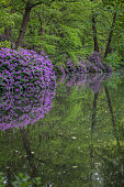 Blooming Rhododendrons and green trees reflected in lake (public park Tiergaten, Berlin)