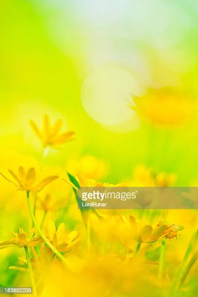 Blühenden Frühling