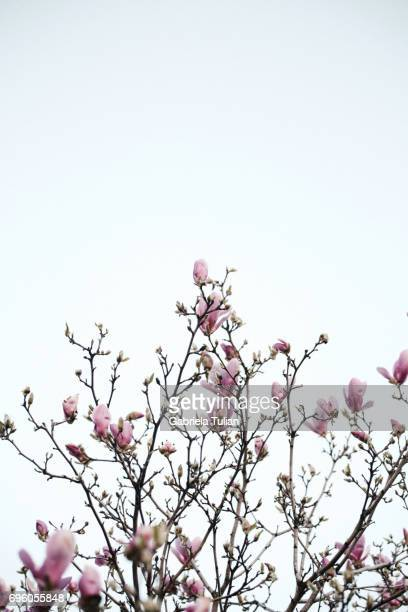 Blooming tree in spring time