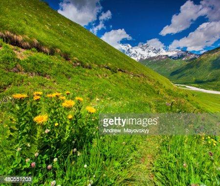 Florecer amarillo flores en la montaña : Foto de stock