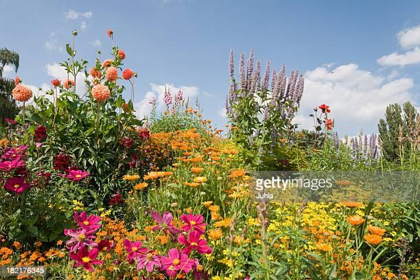 Bloomy garden
