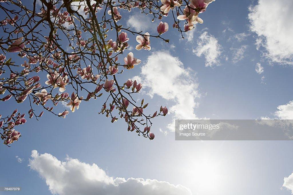 Blossom and sky : Stock Photo