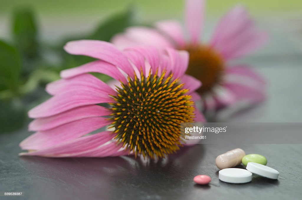 Blossom of coneflower and different forms of drugs