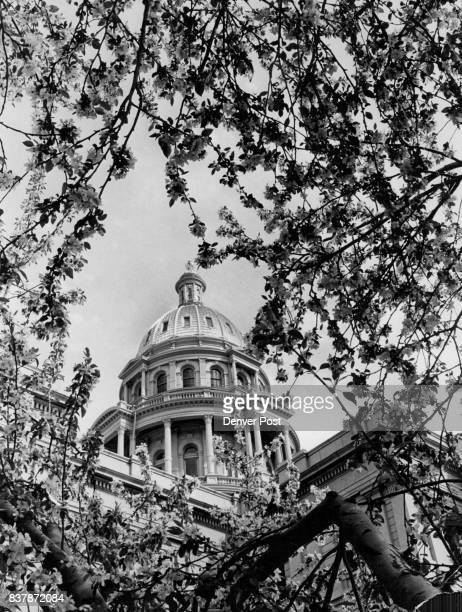 Blossom Time in the Rockies These crab apple trees now in full bloom of glorious white frame the golden dome of the Colorado State house with color...