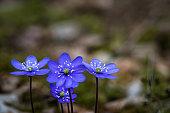 Blossom, Flower, Flower Head, Petal, Pistil