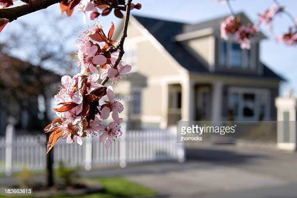 Blossoming alrededores
