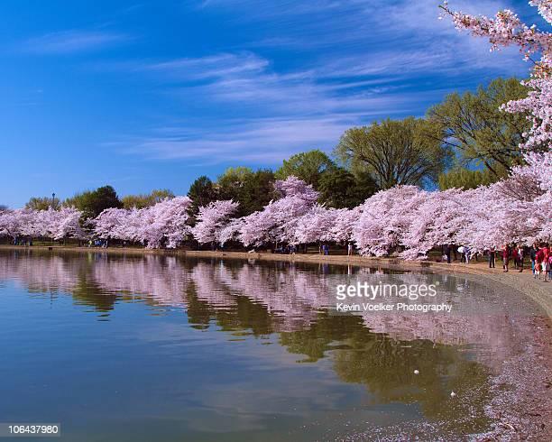 Blossom's at Tidal Basin